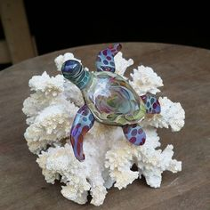 Better shot of the turtle on coral. by sweatyglass