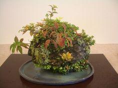 奄美の里:秋の草物盆栽展