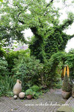 """Auch das ist ein Motiv aus meinem Roman. Und auch aus meinem Garten. Ich liebe diesen alten Baum - so sehr, dass ich ihm ein literarisches und künstlerisches Denkmal gesetzt habe. Wo? Natürlich im """"Garten der alten Dame""""."""