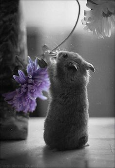 love black & white photography with hint of color. Purple / touch of color / cute critters