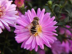 zwalczanie szerszeni Animals And Pets, Insects, Bee, Pets, Bees