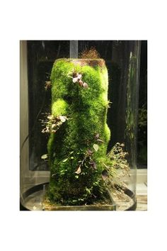 I love this style orchid terrarium and would love to try it with other plants! Mini Terrarium, Orchid Terrarium, Orchid Show, Orchid Care, Moss Garden, Garden Pots, Verticle Garden, Moss Plant, Miniature Orchids