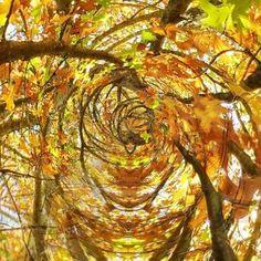 Folhas do Outono Simone🍁🍂🍂