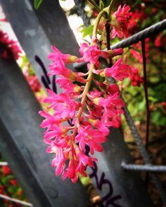 Nature, Plants, Jewelry, Jewlery, Jewels, Flora, Jewerly, Plant, Jewelery