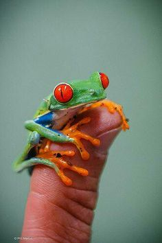 Colorful tiny frog