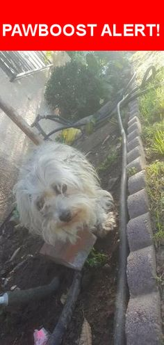 Is this your lost pet? Found in Los Angeles, CA 90744. Please spread the word so we can find the owner!  All white blind Maltese. She was very matted with fleas and ticks.   Nearest Address: Near Sanford Ave & M Street