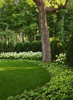 Lawn lined with plants. Want my yard to look this good!