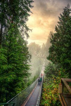 Foggy Sunrise in Capilano Suspension Bridge, British Columbia Canada