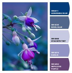 Paint colors from ColorSnap by Sherwin-Williams Colour Palettes, Colour Schemes, Color Combinations, Paint Colors For Home, House Colors, Color Mixing, Color Pop, Disney Princess Memes, Bleu Violet
