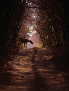 Night stalkers...