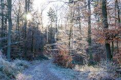 Die Sonne im frostigen Wald - auf http://ronni-shop.fineartprint.de