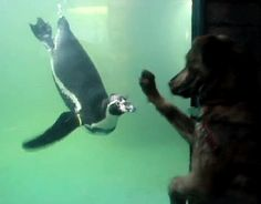 because birds! — Dog meets penguin. more here http://artonsun.blogspot.com/2015/04/because-birds-dog-meets-penguin-more.html