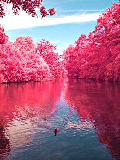 Cherry River Plaza Branch, Richwood (West Virginia)