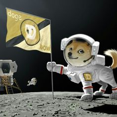 Dogecoins going to the moon!