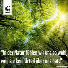 sprüche natur Zitate Natur   zitate weisheiten sprüche natur