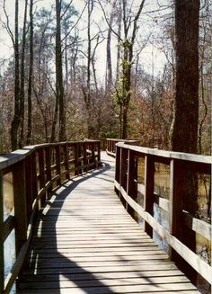 Boardwalk Loop, Congaree National Park, South Carolina