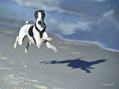 Hilarious Photographs Of Dogs Floating In MidAir Photographs - Hilarious photographs dogs floating mid air