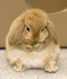 Did you ever notice that real bunnies look like they're actually wearing bunny slippers?