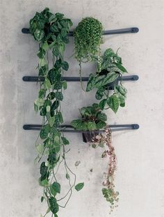 trailing plants on wall brackets