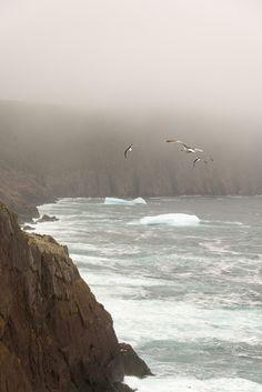 Fog, Gulls and Bergs (by Hyacinthe Raimbault)