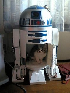 Cats and Star Wars together... perfect match!