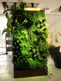 Patrick Blanc's Vertical Garden for the Home — Paris, France