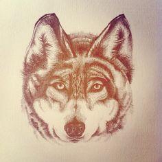 #wolf #wolves #illustration #art #norway #norwegian #pencil #sketch #animals #wildlife