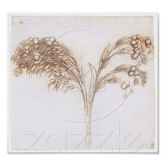 Detailed Drawing of Long Stemmed Plant, Da Vinci Posters from Zazzle.com