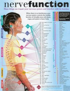Nerve Function Chart : ' Many things can impair your nervous system and interfere with its function. When there is no interference, your nervous system controls the healthy function of virtually every cell, tissue, organ, and system of your body. Fitness Workouts, Fitness Hacks, Chiropractic Care, Chiropractic Center, Nerve Pain, Massage Therapy, Massage Envy, Physical Therapy, Occupational Therapy