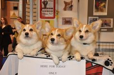 THE QUEENS DOGS