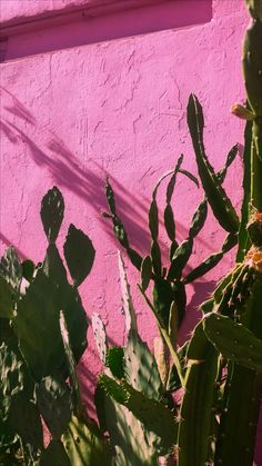 #TUMBLR #WALLPAPER #Iphonewallpaper #pink #wall #pinkwall #background #background #cactus #rosa #fondodepantalla #paredrosa #Girl #Girly #HD #photo #tumblrwallpaper #cannon #wallpapercelular #fondosparacel #rosita #verde #wallpapercool
