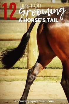 12 Tips for Horse Tail Grooming - Seriously Equestrian