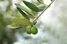 ½ cup extra virgin olive oil with 1 tbsp. sea salt. - facial scrub