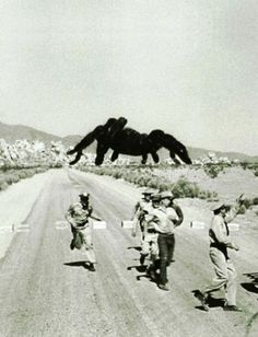 """Tarantula (1955, dir. Jack Arnold)    This entry in the """"Science Gone Horribly Wrong"""" genre is mainly notable for the giant, rampaging mutant tarantula, young Clint Eastwood's brief appearance as a napalm-dropping fighter pilot, and special effects good enough to traumatize arachnophobic viewers."""