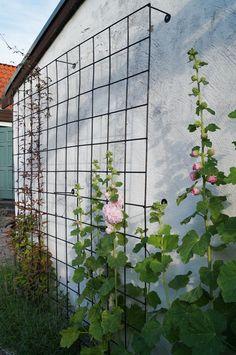 Vår trädgård idag…