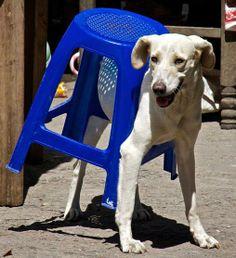 La Stampa - Piccoli disastri casalinghi combinati da cani e gatti