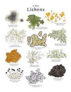 Botanical Illustration, Botanical Prints, Botanical Drawings, Plant Identification, Nature Journal, Art Education, Stuffed Mushrooms, Illustrations, Fungi