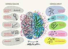 La pensée visuelle stimule la collaboration des deux cerveaux : le gauche, séquentiel et logique, et le droit, holistique et intuitif.