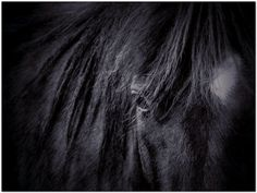 Horse Photography on Canvas  Large Wall Art on by StudioDandK