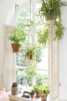 Hangplanten voor het raam.