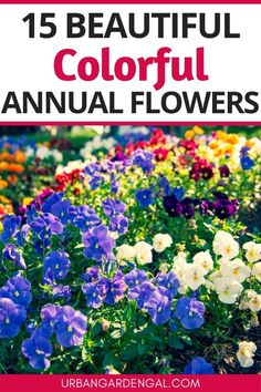 Colorful annuals are great for brightening up your flower garden. They're also perfect for pots, containers and hanging baskets. Here are 15 colorful annual flowers to plant in your garden. #annuals #flowers #flowergarden Flower Gardening, Planting Flowers, Annual Flowers, Hanging Baskets, Garden Beds, Perennials, Plants, Color, Beautiful