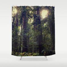 Travel everyday to the magic of the Redwoods. Sunrays in the Redwoods  Shower Curtain  by Amy J Smith Photography - $68.00