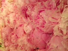 Peonies i just want to lay in a bed of these!! one of my favorite flowers.