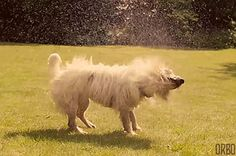 The wet dog full body shake. | 17 Sounds Every Dog Owner Knows Too Well