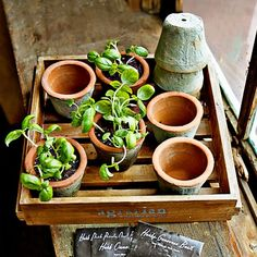Rustic Seedling Pots In Wood Crate With Seeds #williamssonoma