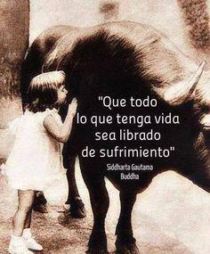 """""""Que todo lo que tenga vida sea librado de sufrimiento."""" #Buda #Derechos #Animales"""