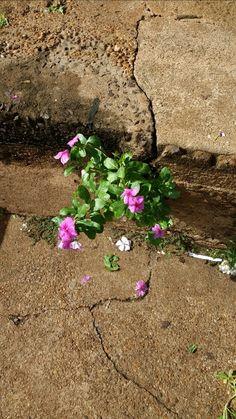 A chuva é o vento que leva/o sol é o vento que traz/me diz porque tanto bem-me-quer ou mal-me-quer/não diga que plantou e não deu/a flor mal nasceu,morreu/e ao beijar o chão, suspirou e se rendeu (A flor- Arthur Aguiar) #flowers #nature