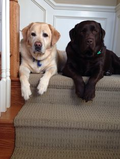 Just a couple of lounging labs