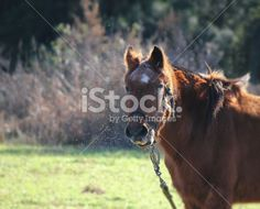 Horse farm between insects Royalty Free Stock Photo