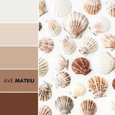 Sea shells pattern on white background, flat lay, top view minimal texture Color Palette 375 – Ave Mateiu -  Summer 2020, color palette, color palettes, colour palettes, color scheme, color inspiration, color combination, art tutorial, collage, digital art, canvas painting, wall art, home painting, photography, weddings by color, inspiration, vintage, wallpaper, background, rustic, seasonal, season, natural, nature
